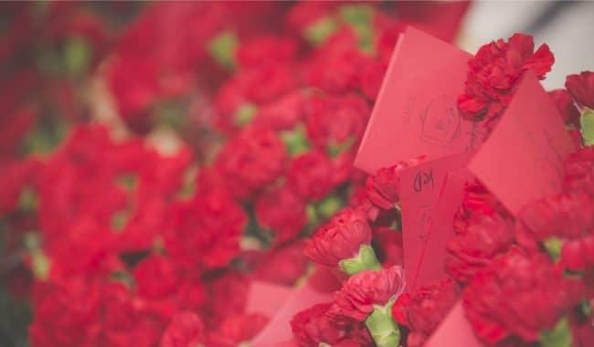 Walpole Carnations